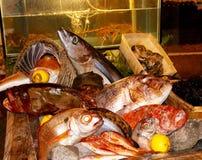 Pescados del día Fotos de archivo libres de regalías