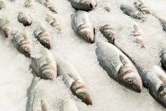 Pescados del dace del mar en el hielo Foto de archivo libre de regalías