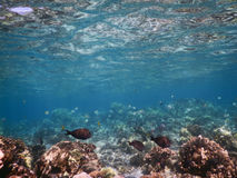 Pescados del filón Imagen de archivo libre de regalías