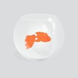Pescados del oro en acuario Fotos de archivo libres de regalías