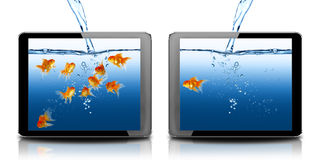 Pescados del oro en PC del ordenador de la tablilla Fotografía de archivo