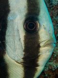pescados del palo Fotos de archivo libres de regalías