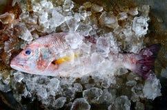 Pescados del pargo rojo del mercado de la industria pesquera Imagen de archivo