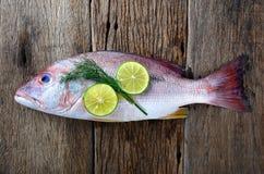 Pescados del pargo rojo del mercado de la industria pesquera Imágenes de archivo libres de regalías