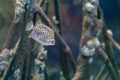 Pescados del punto debajo del mar fotos de archivo