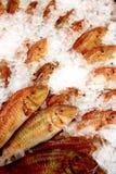 Pescados del salmonete rojo Imagen de archivo