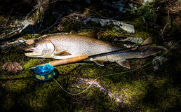 Pescados del trofeo Imagen de archivo