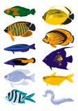Pescados del vector Foto de archivo libre de regalías