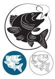Pescados depredadores Imagen de archivo libre de regalías