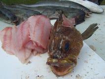 Pescados destripados de la roca con los pescados del Verde-vínculo Fotografía de archivo libre de regalías