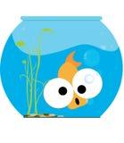 Pescados divertidos Fotografía de archivo libre de regalías