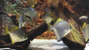 Pescados en acuario metrajes