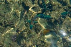 Pescados en agua Imágenes de archivo libres de regalías