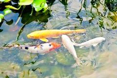 Pescados en agua Fotos de archivo libres de regalías