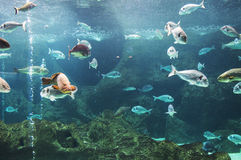 Pescados en arrecife de coral Imágenes de archivo libres de regalías