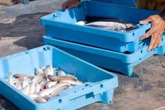 Pescados en bandejas plásticas Imagen de archivo libre de regalías