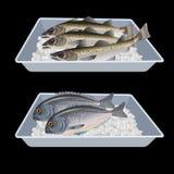 Pescados en cajas del envase ilustración del vector