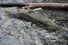 Pescados en cala Imagen de archivo libre de regalías