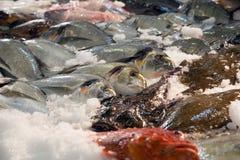 Pescados en contador español del mercado Fotos de archivo
