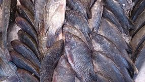 Pescados en detalle del supermercado Fotografía de archivo