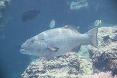 Pescados en el acuario Imagen de archivo