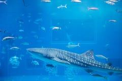 Pescados en el acuario Imágenes de archivo libres de regalías