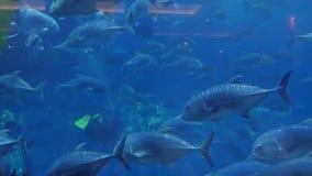 Pescados en el acuario dubai almacen de video