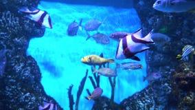 Pescados en el acuario Muchos pescados coloridos hermosos Fondo de la cámara lenta metrajes