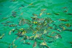 Pescados en el agua Imagen de archivo
