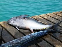 Pescados en el embarcadero imagenes de archivo