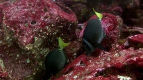 Pescados en el fondo del mar subacuático en las Islas Galápagos metrajes