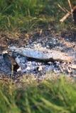 Pescados en el fuego Foto de archivo libre de regalías