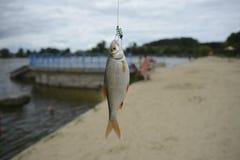 pescados en el gancho de leva Imagenes de archivo