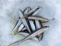 Pescados en el hielo   Imagenes de archivo