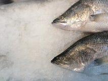 Pescados en el hielo Imagen de archivo