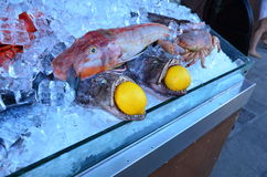 Pescados en el hielo Fotografía de archivo libre de regalías