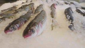 Pescados en el hielo para la venta almacen de metraje de vídeo