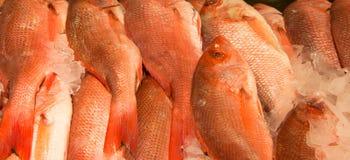 Pescados en el hielo en un mercado de pescados imagenes de archivo