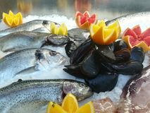 Pescados en el hielo y conchas marinas sazonadas con la fruta cítrica imagen de archivo