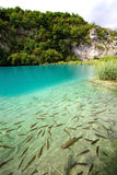 Pescados en el lago Imagen de archivo libre de regalías