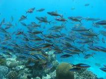 Pescados en el mar Fotografía de archivo libre de regalías