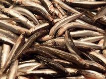 Pescados en el mercado Foto de archivo libre de regalías