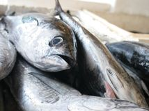 Pescados en el mercado Fotos de archivo libres de regalías