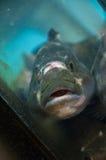 Pescados en el mercado de pescados de Tsukiji Imágenes de archivo libres de regalías
