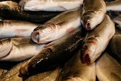 Pescados en el mercado de pescados veneciano, Italia imagen de archivo