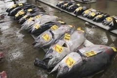 Pescados en el mercado de Tsukiji, Japón Fotografía de archivo