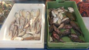 Pescados en el mercado, Grecia Fotos de archivo