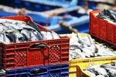 Pescados en el puerto de Essaouira Foto de archivo libre de regalías