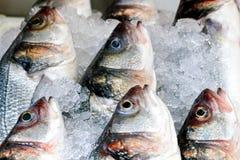Pescados en hielo Fotografía de archivo libre de regalías