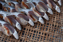 Pescados en kradang Fotos de archivo libres de regalías